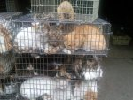 Chinese-Live-Animal-Market-Cats-gGH74ag.jpg