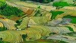 KHAU_PHẠ_MÙA_NƯỚC_ĐỔ_-_panoramio.jpg