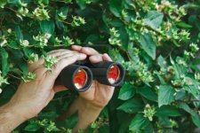 10251182-watching-from-the-bushes-with-binoculars.jpg