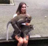 monkeysexgirl.jpg