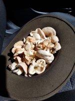 shrooms_hat.jpg
